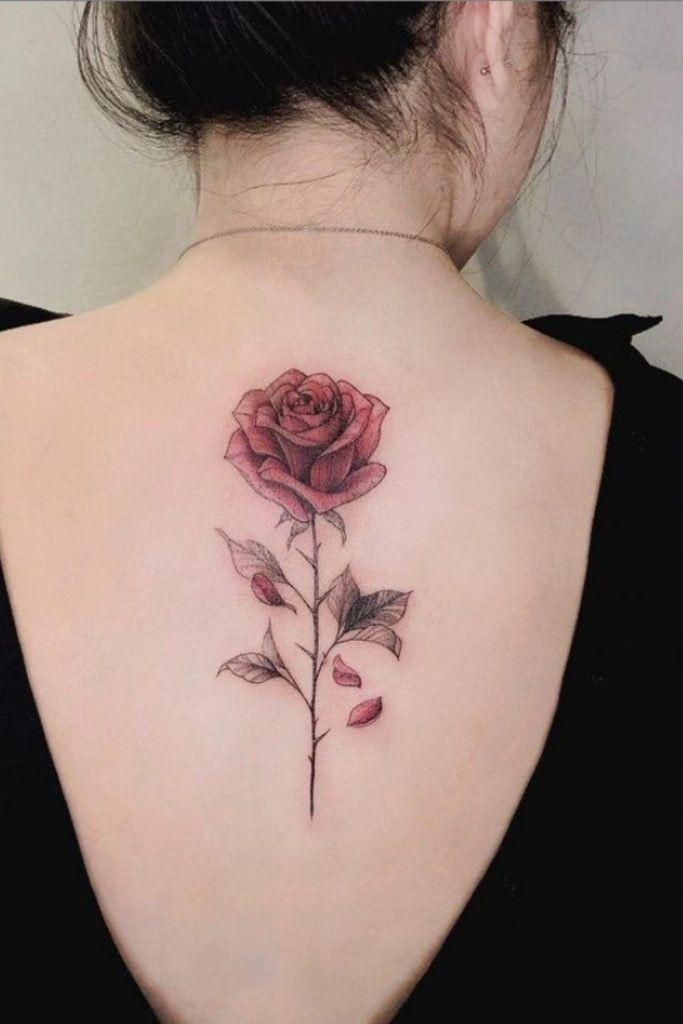 Beautiful red rose tattooed on the back is more charming